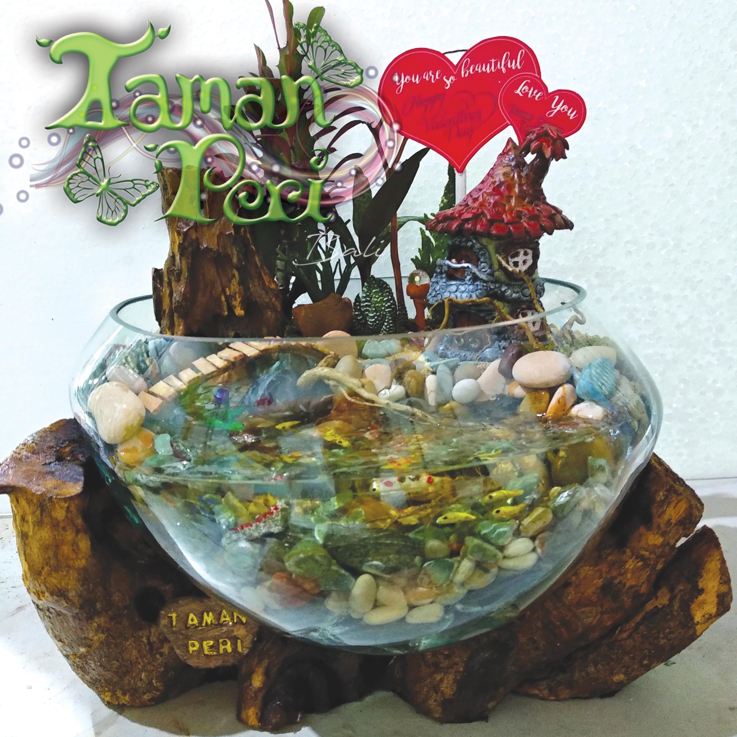 Bali Kaktus Succulent Mini Fairy Garden Valentine Gift