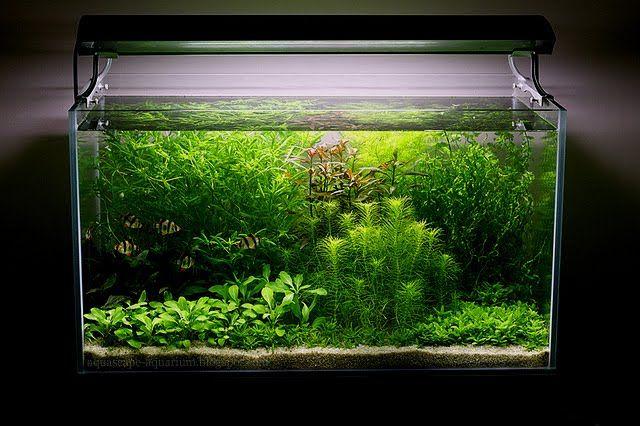 Aquascaping Dutch Planted Aquarium Rules Techniques