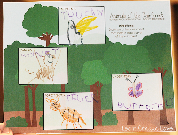 free printable animals of the rainforest sheet draw an animal that lives in each