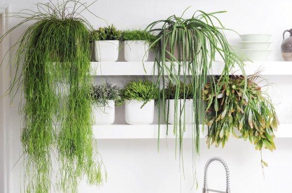 Zimmer Pflanzen-Vielfalt Begrünung-Wandregale Hängende-Blumentöpfe ...