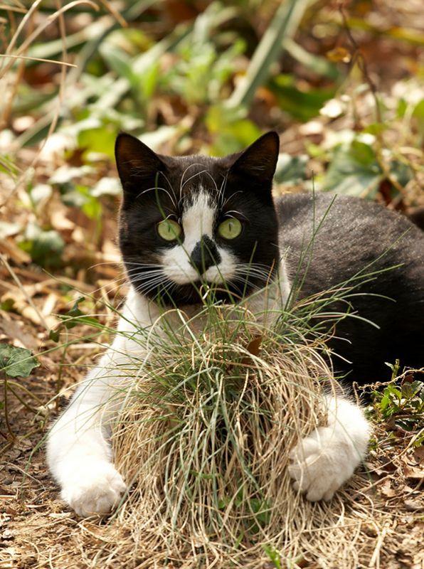 Cat Garden CountryMaxcom Cat Portraits Pinterest Cat garden