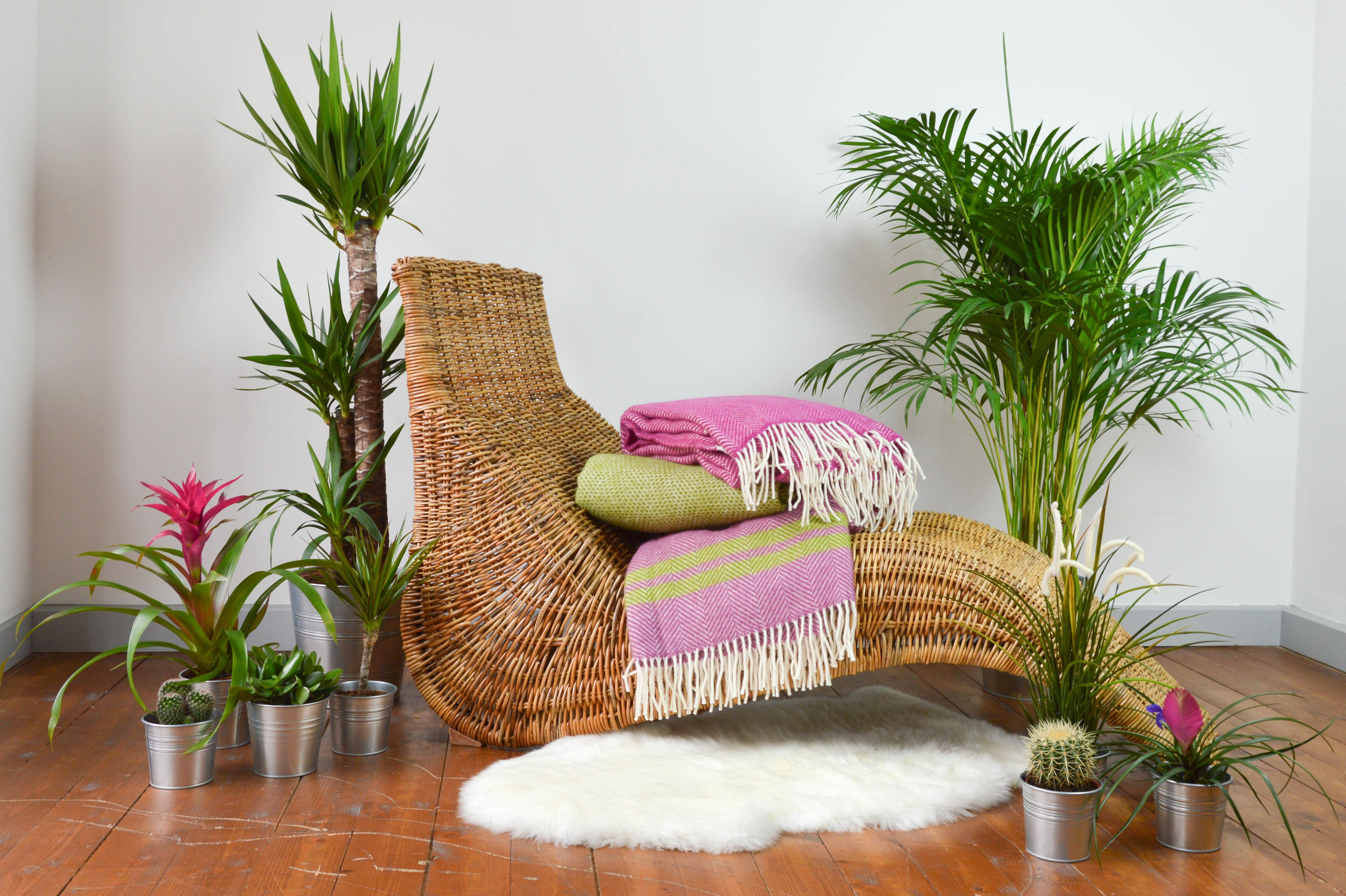 Tropical Lifestyle | The Tartan Blanket Co.