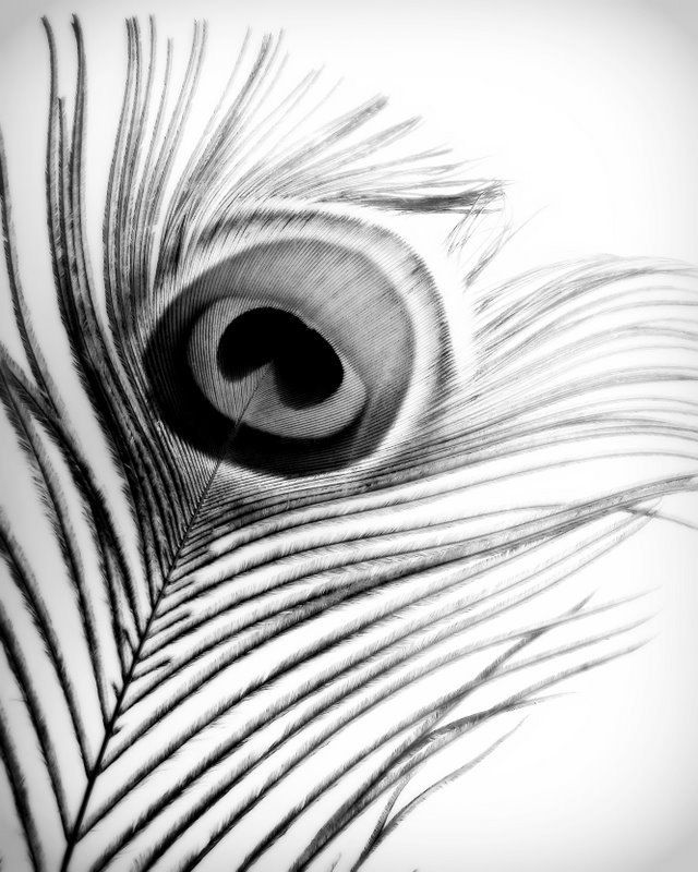 This Item Is Unavailable Feather Photography Feather Tattoo Black Black And White Drawing