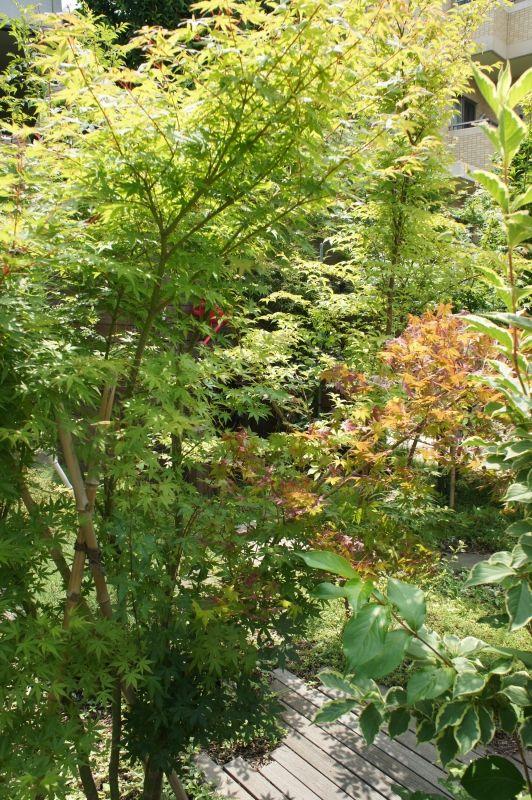植木、もみじ、ウッド