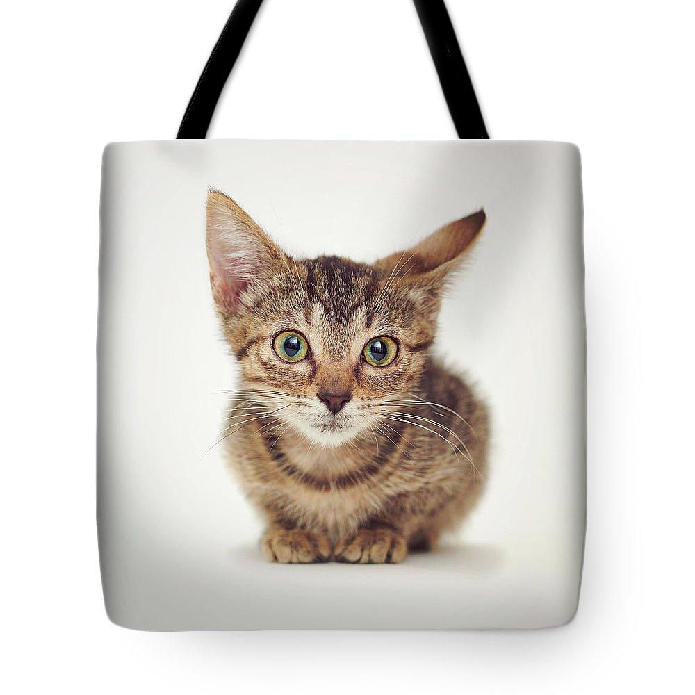 Kitten Tote Bag Featuring The Photograph Cute Suspicious Kitten By Calina Bell Kitten Bag Sale Kitten Decor