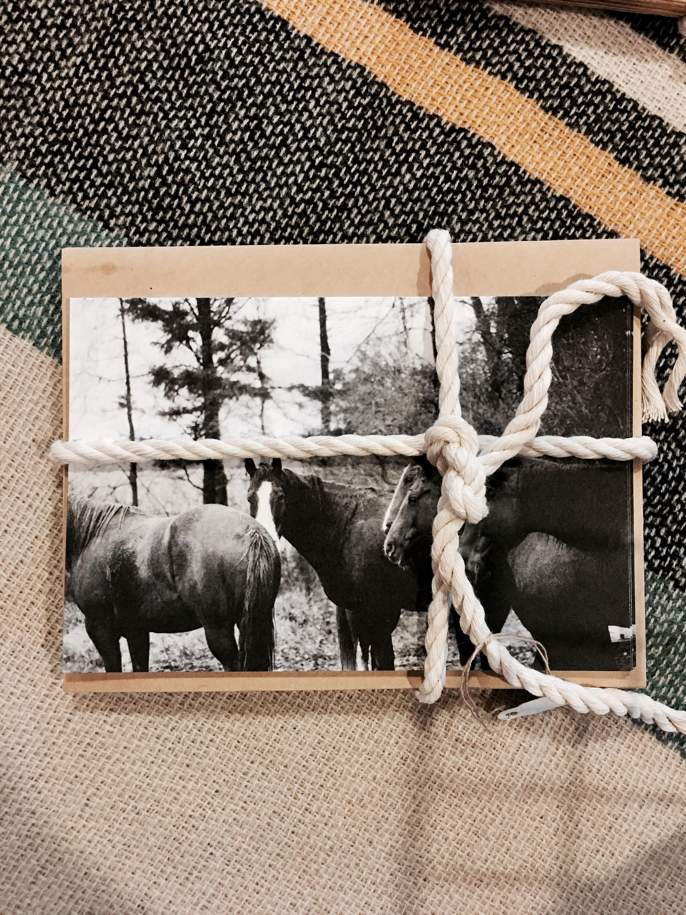 Greeting cards horse greeting card black and white photo card by 17photosmn on etsy