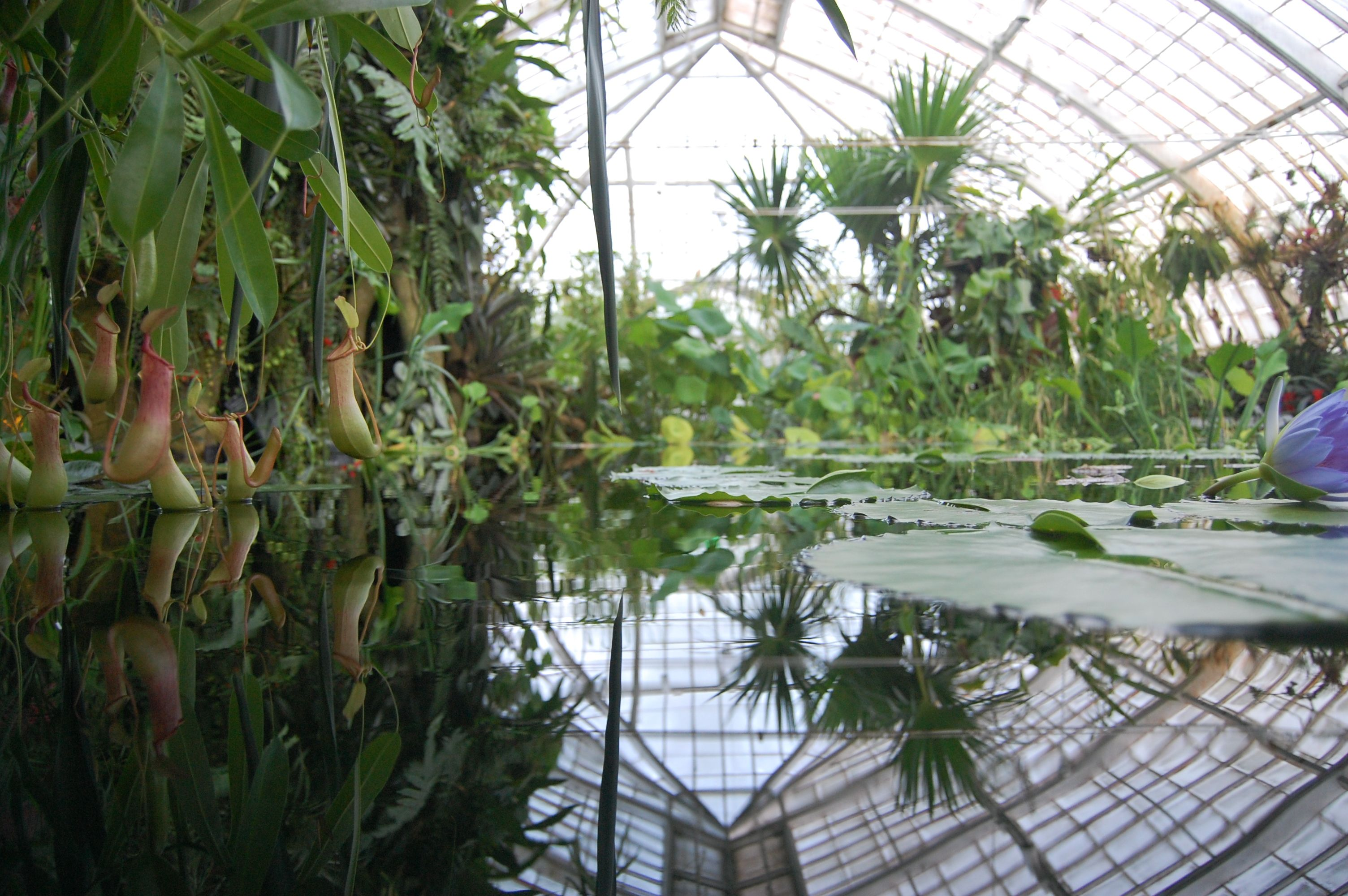 Indoor reflective pond greenhouse pinterest indoor for Indoor garden pool