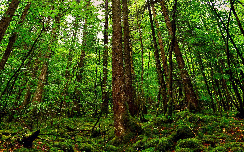 Rainforest Trees HD Wallpaper Rainforest trees