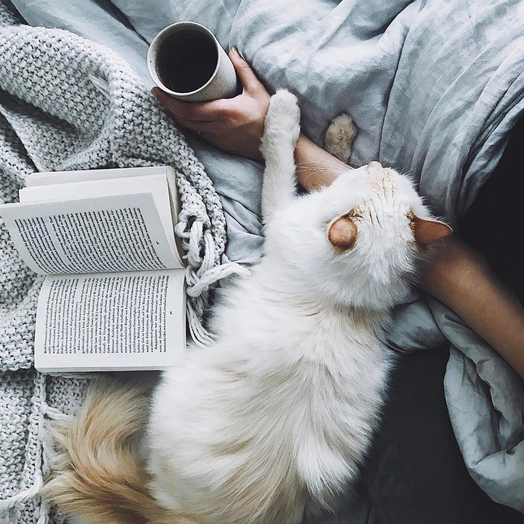 one book, one hot drink ,and one cat——inner peace