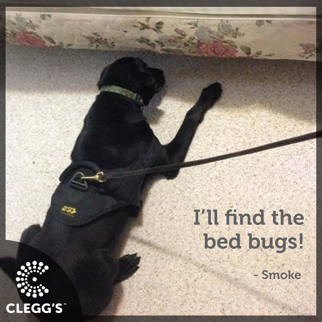 Smoke Will Find The Bed Bugs Bed Bug Dog Canine Beds Bed Bugs