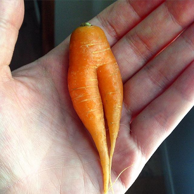 Can You Stand How Cute This Baby Carrot Is Carrots Real