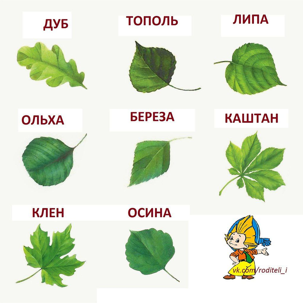 деревья картинки для детей с названиями: 10 тыс ...
