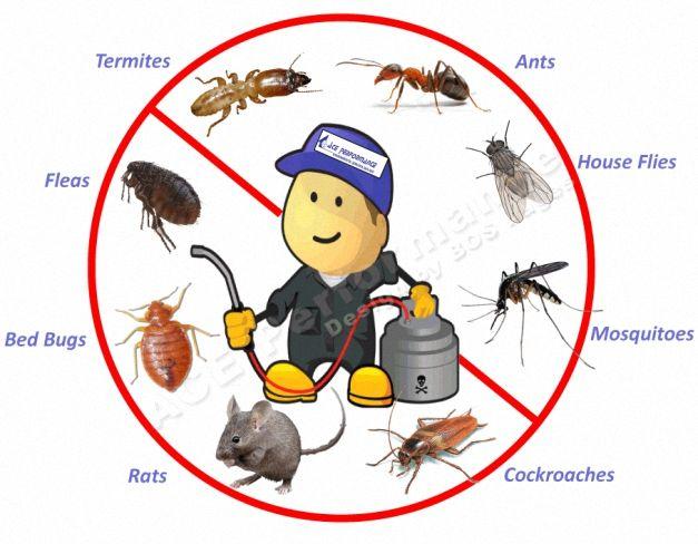 شركة رش مبيدات بالرياض 0536818956 Pest Control Pest Control Mice Termite Control