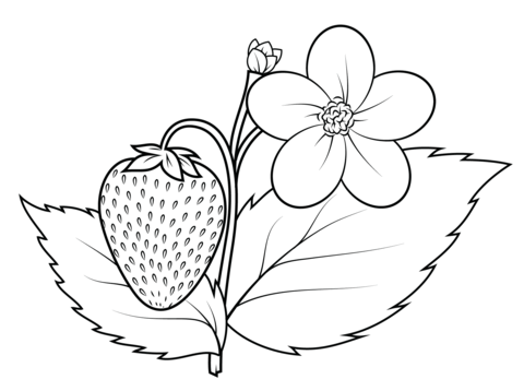 Strawberry Plant Coloring Page From Strawberry Category Select From 26736 Printable Crafts Of C Fruit Coloring Pages Free Coloring Pages Flower Coloring Pages