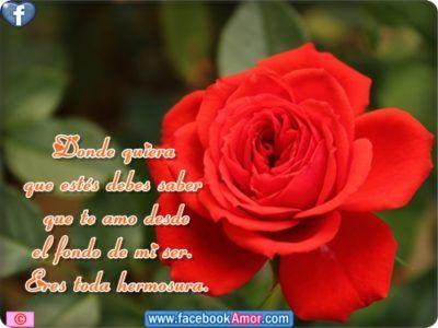 Imagenes De Rosas Con Frases Bonitas Dedicar Flores Hermosas Flowers