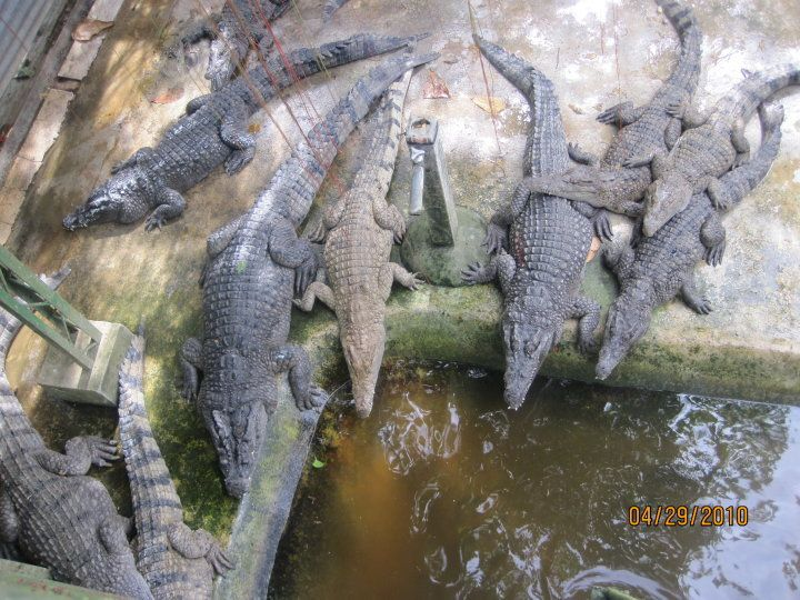 Crocodile Farm, Palawan