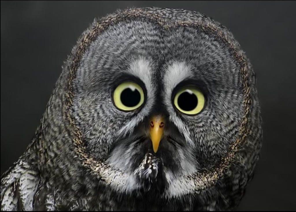 whatchyoulookinat?? Owl eyes, Owl, Funny owls