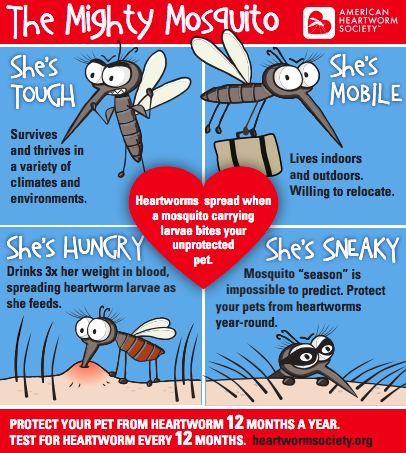The Mighty Mosquito American Heartworm Society