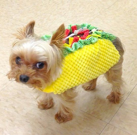 14 Fabulous Pets Dressed As Food Related Things For Halloween Pet Halloween Costumes Halloween Animals Pet Dress