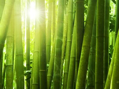 Although the bamboo is the fastest-growing plant on Earth, it looks lazy at first because it has no branches…just lots of deep and wide roots. Once its roots take hold, though, bamboo is capable of surging as fast as 48 inches in 24 hours. So are we … if we grow strong roots.