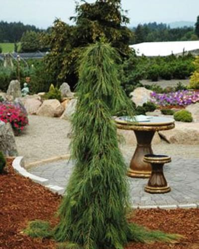 Nursery Indoor Plants Near Me: Vegetable Garden Design, Front Yard Plants