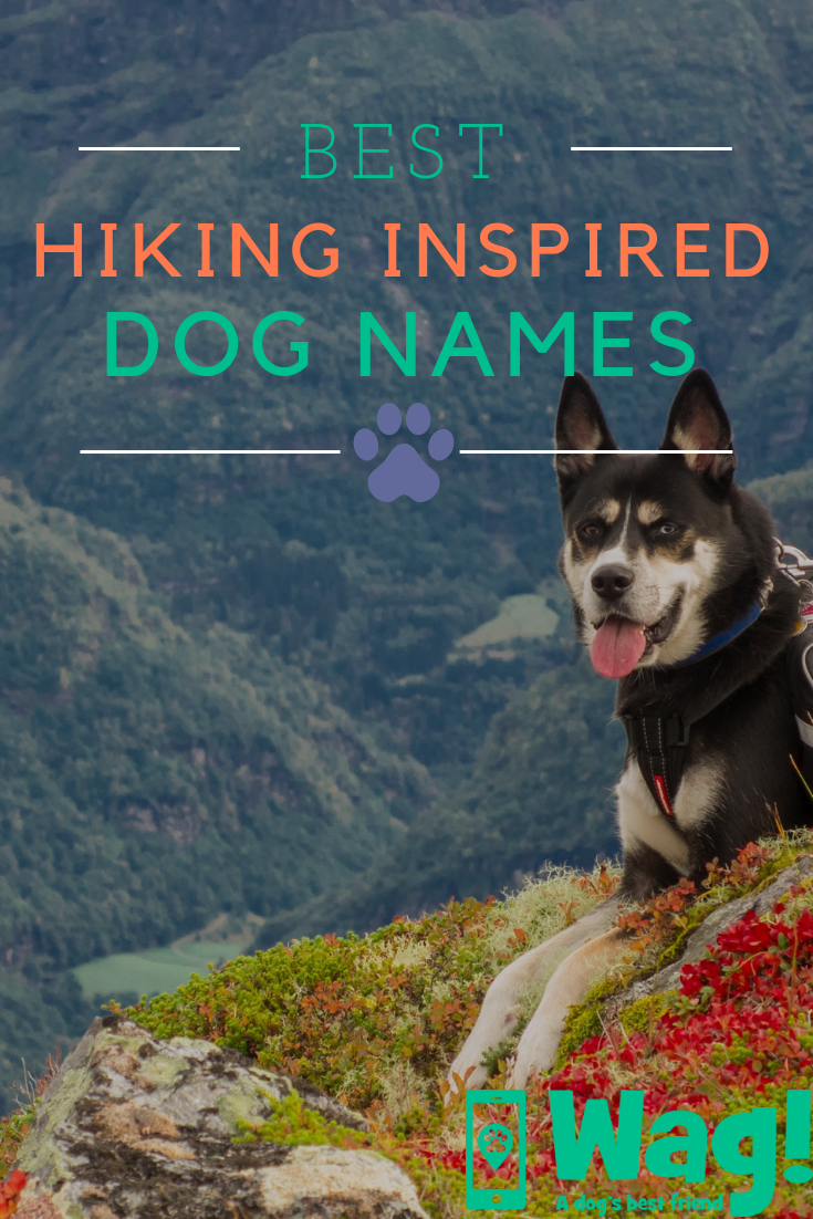 Hiking Inspired Dog Names Wag Dog Names Puppy Names Unusual Dog Names