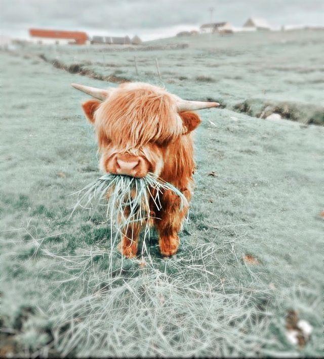 Pin by Jjxhchxhxhxhx on Cute baby animals in 2021 | Cute wild animals, Cutee animals, Cute baby animals