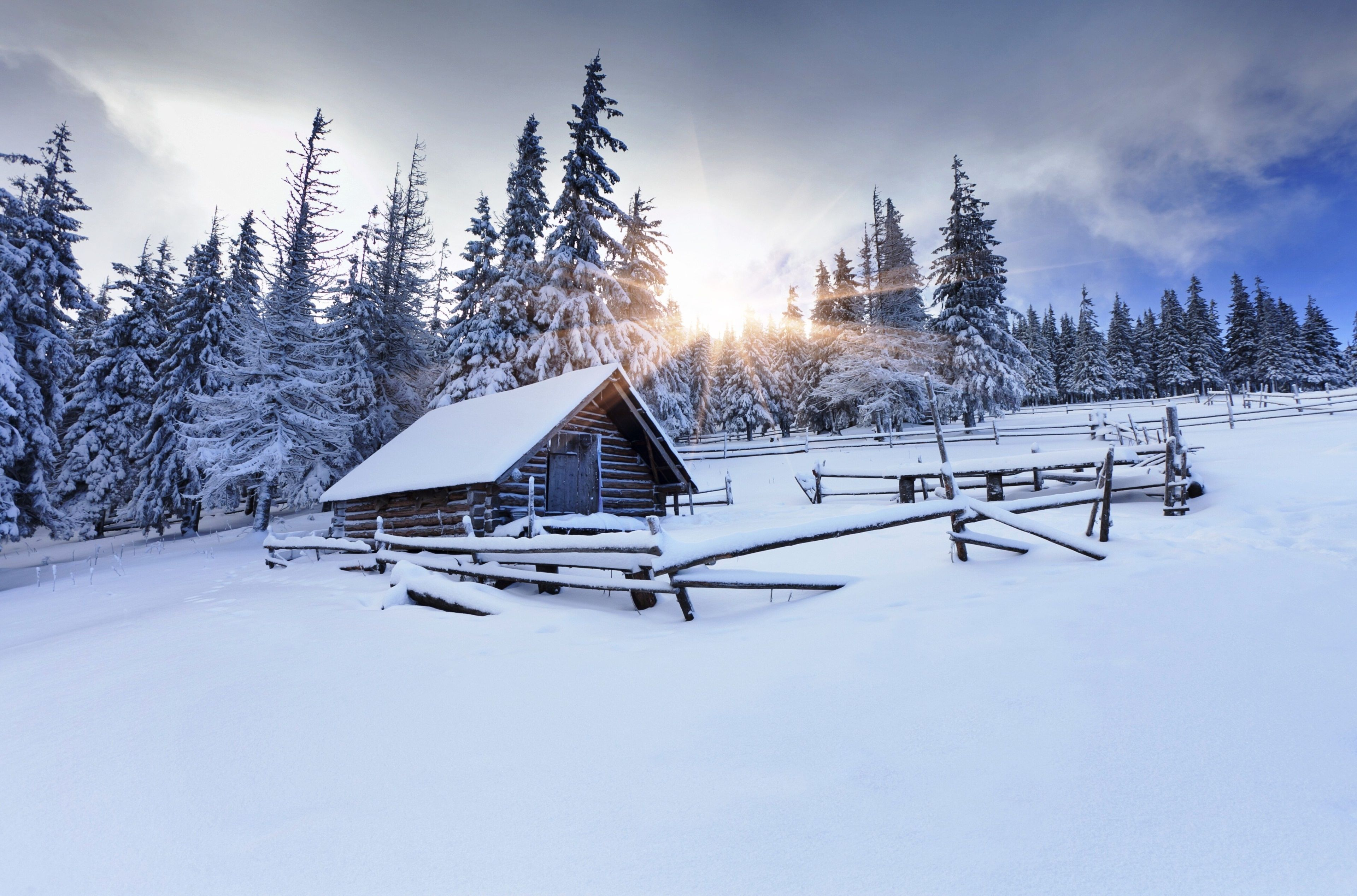 3840x2537 Winter Forest 4k Hd Image For Wallpaper