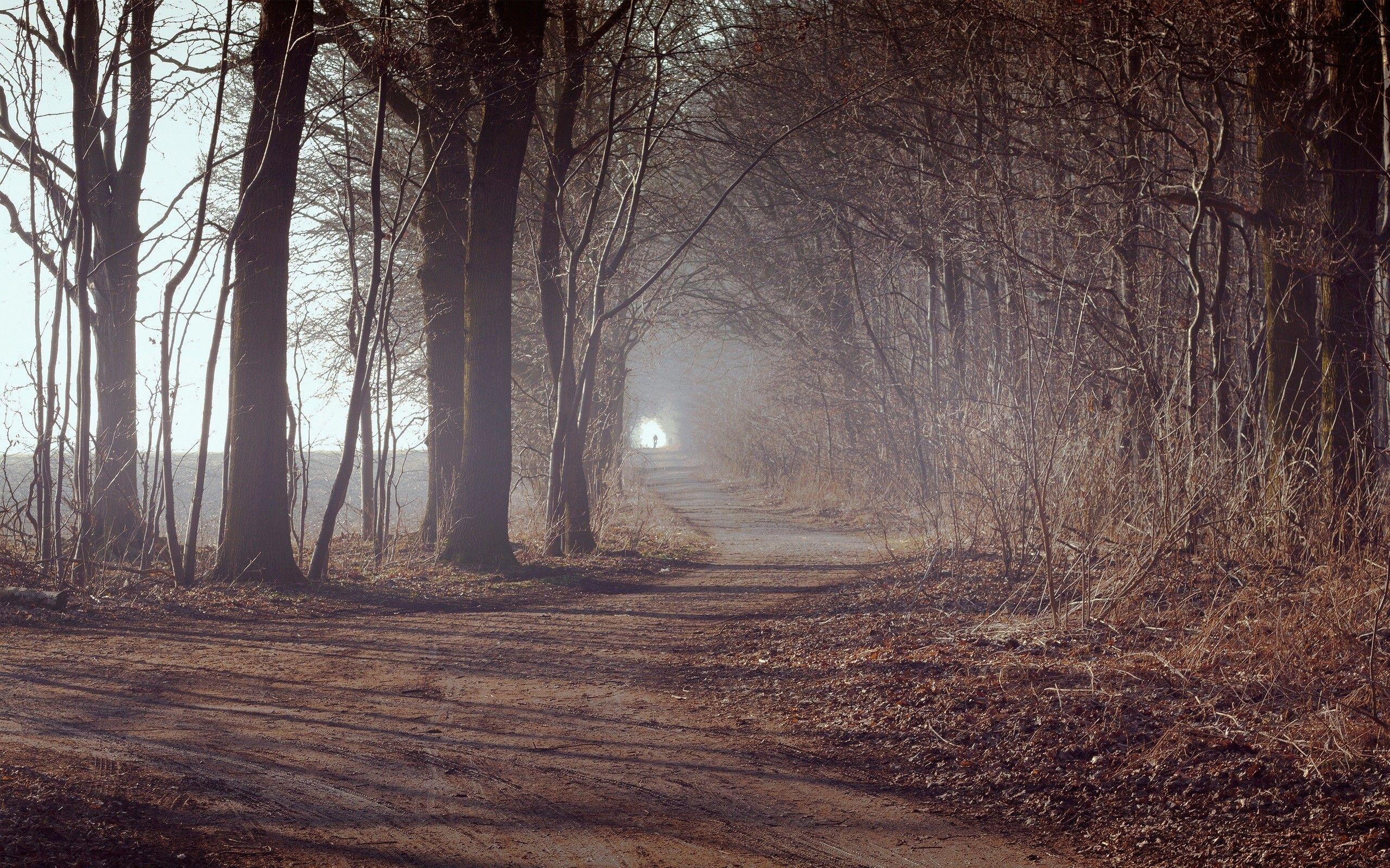 follow Misty forest, Desktop wallpaper fall, Bicycle