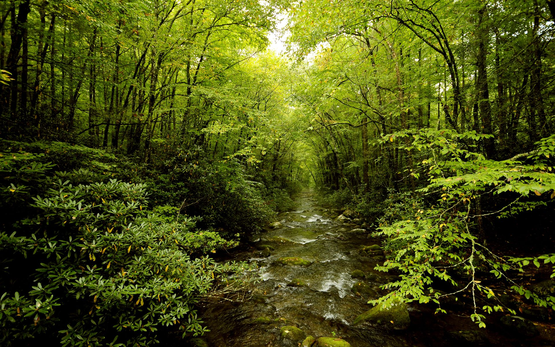 Forest River Wallpaper Rivers Nature Wallpapers in jpg format for ...