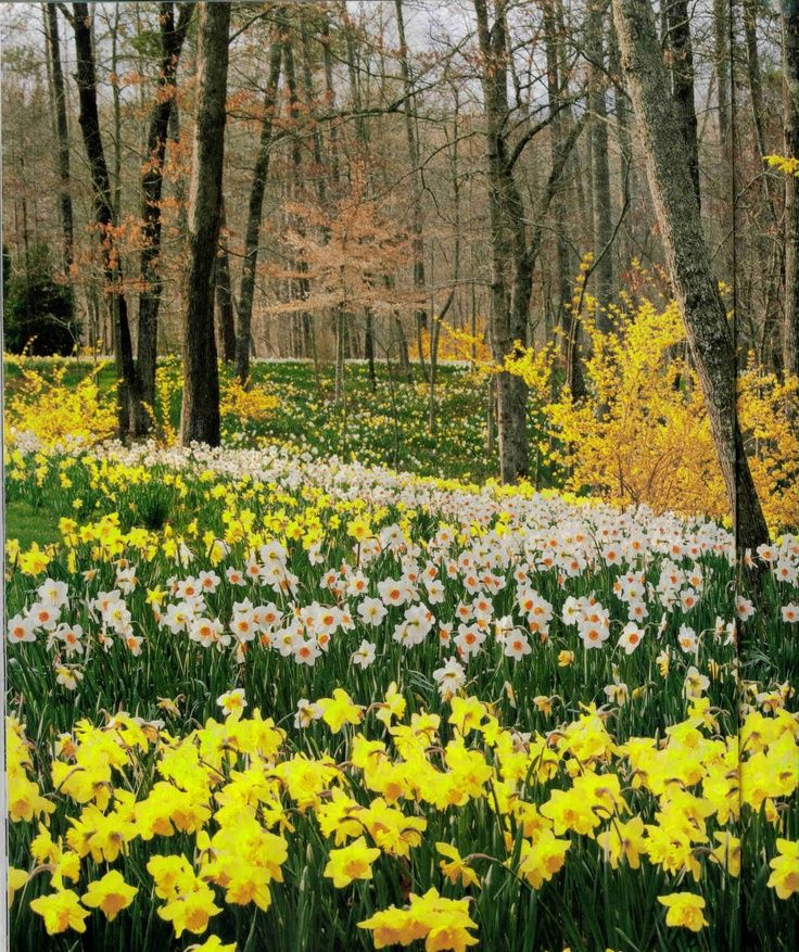 Gibbs Gardens   Spring   Pinterest   Gardens, Flowers and Garden ideas