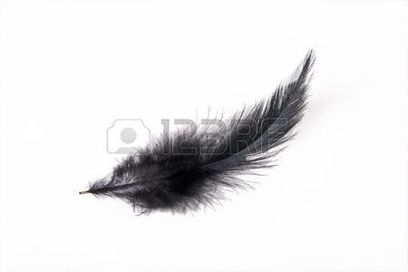 Plume D Oiseau Noir Sur Fond Blanc Oiseau Noir Plume D Oiseau Fond Blanc