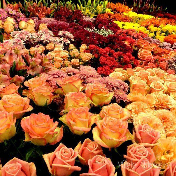 Цветы розы оптом