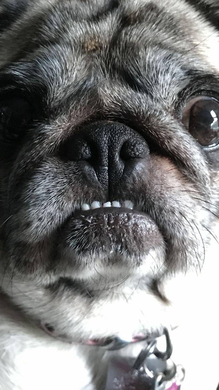 Puppies Good Pups Instagram Posts Videos Stories On