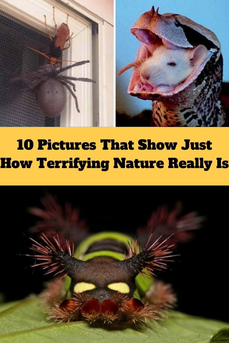 #10 #Pictures #That #Show #Just #How #Terrifying #Nature #Really #Is