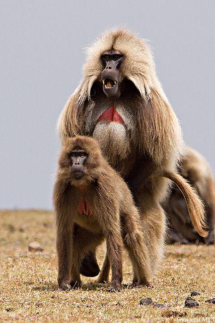 Nackte zierliche Oralsex mit Schimpansen Junge BDSM versohlt