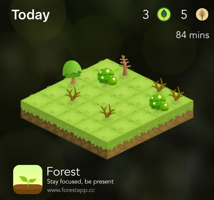 "Study app. ""Forest"""