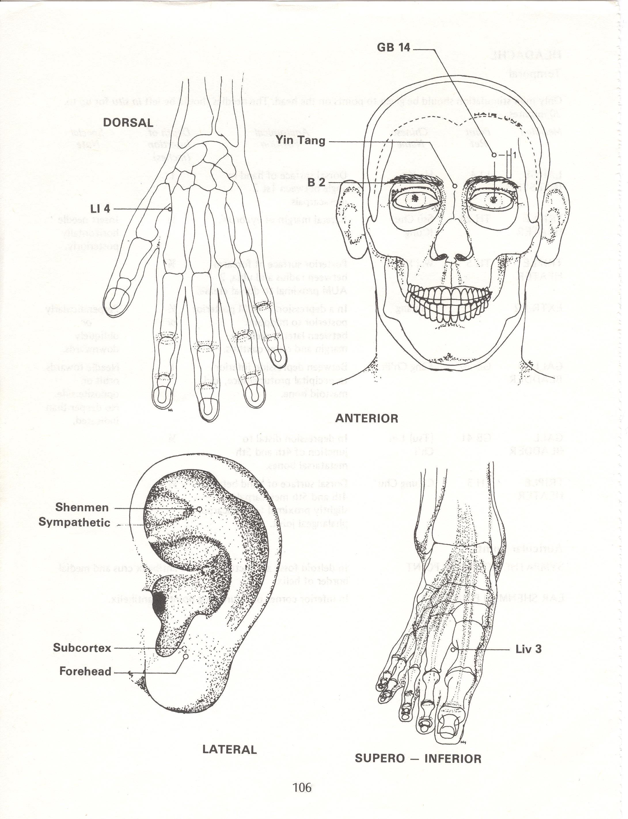Leg Acupuncture Points Left | Wiring Diagram Database