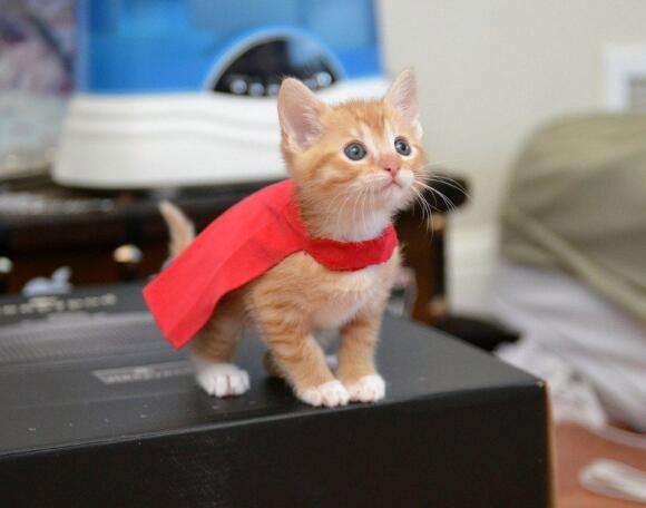 かわいい猫ちゃん画像館 @catpic11  9月16日 僕は飛べるのかな?