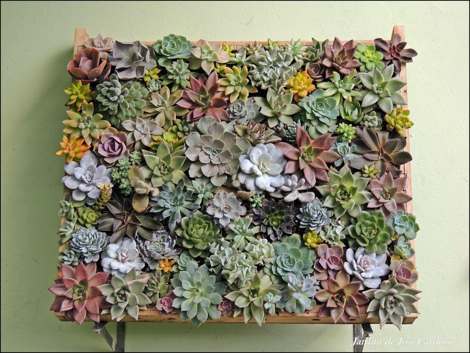 Resultado de imagem para grand jardim de suculentas