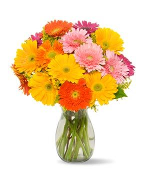 Gerbera Daisies Bouquet (Click through to get free shipping)