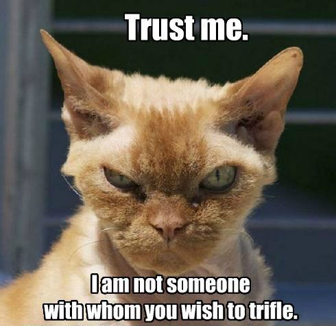 funny cat pictures | funny-cat-pictures-trust-me.jpg