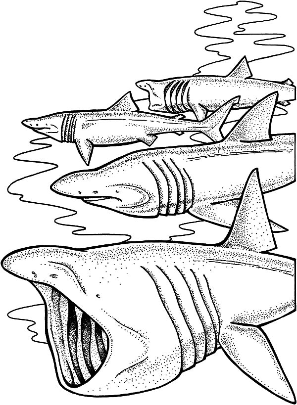 school of shark jaws coloring pages  best place to color