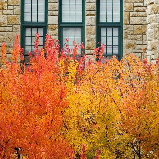 Small Ornamental Trees For Kansas: Top Trees And Shrubs For Fall Color