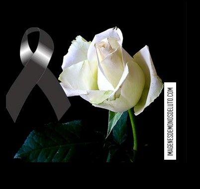 Flores Blancas De Luto Rosa De Luto Frases De Flores Imagenes De Condolencias
