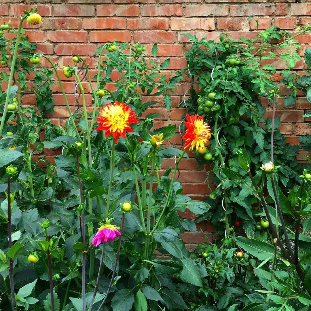 Wer Einen Garten Hat Lebt Schon Im Paradies Aba Assa Garten Gemusegarten Blumengarten Dalie Dalien Dahlie D Garden News Dahlia Home And Garden