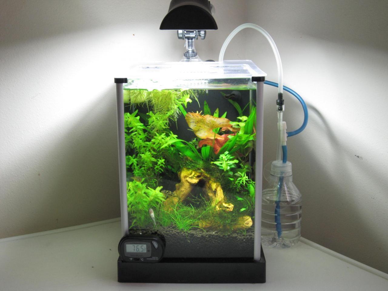 Cheerful and small just 2 gallons mini aquariums for Plante nano aquarium