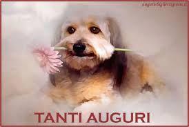 Risultati Immagini Per Buon Compleanno Con Gatti E Cani Biglietti