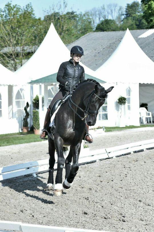 Dressage World Kristina Sprehe Desperados C Uvex Equestrian Dressage Horses Dressage Horses