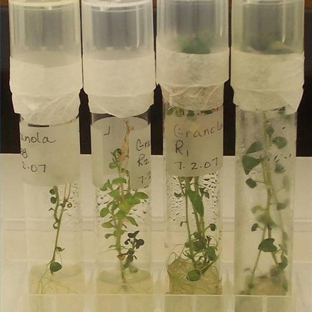 Introduction to Plant Tissue Cultures Plant tissue, Culture and Plants - plant biotechnology resume